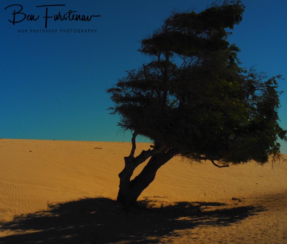 Little shade in sandy desert