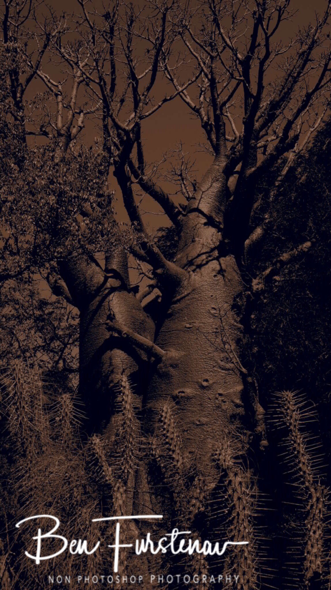Baobab tree In spiky environment
