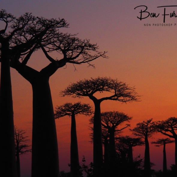 Baobab Alley Madagascar