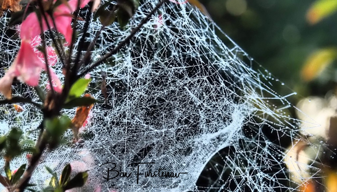 mist covered spiderwebs