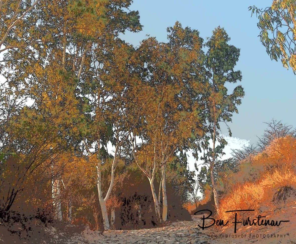 Eucalyptus trees lining the shore