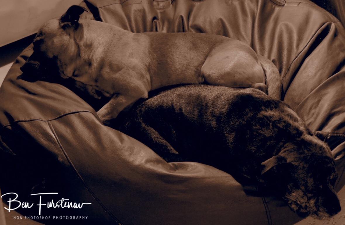 Resting puppies