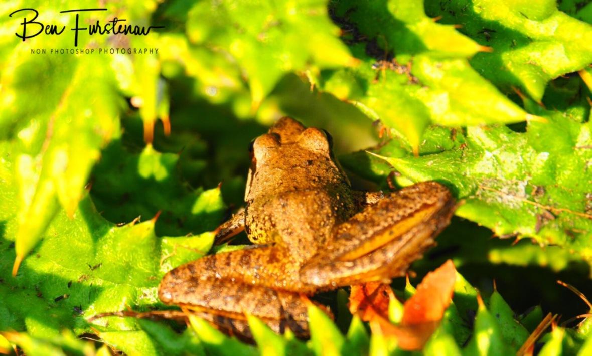 Iny tiny spiny frog