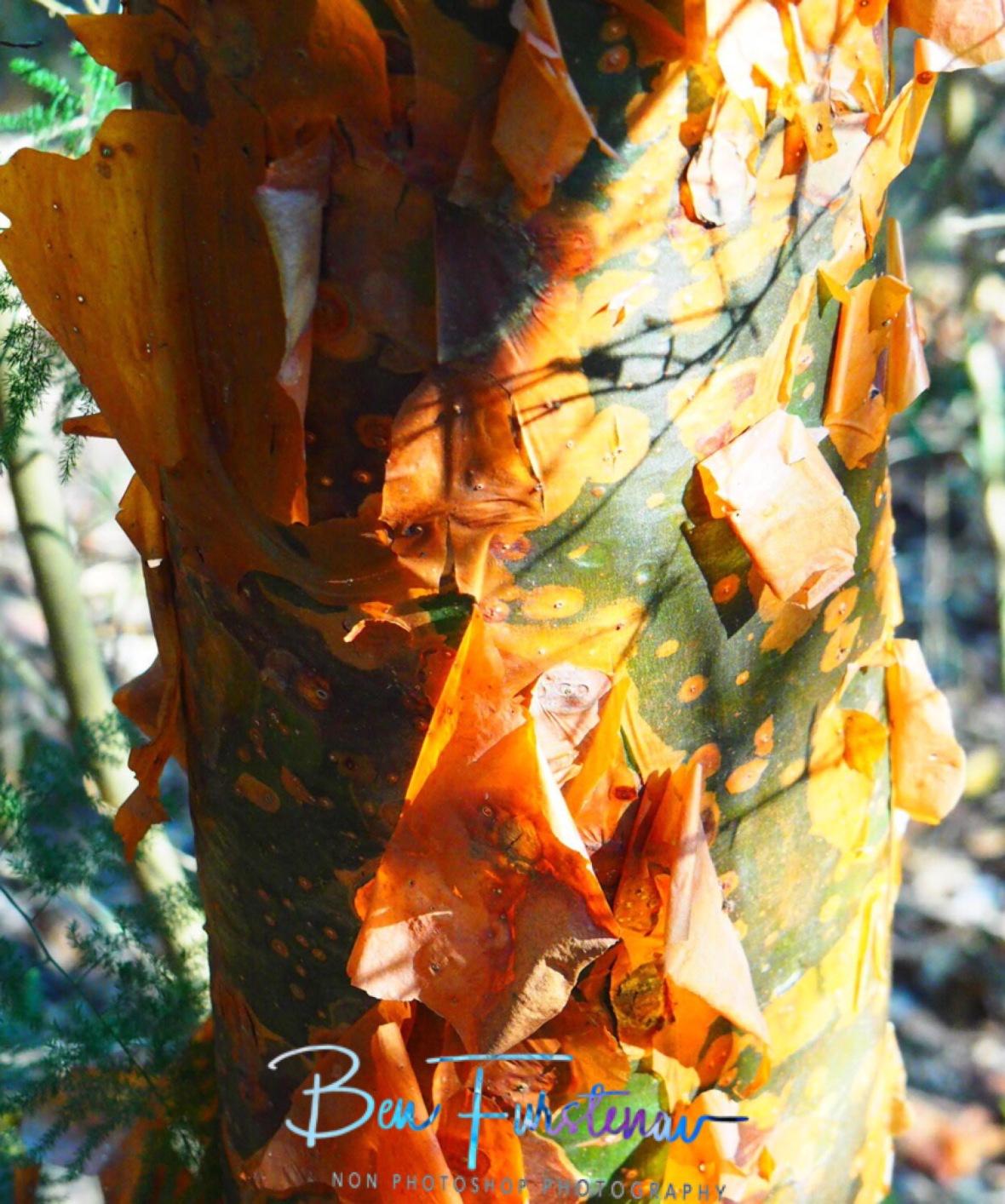 Wassa tree
