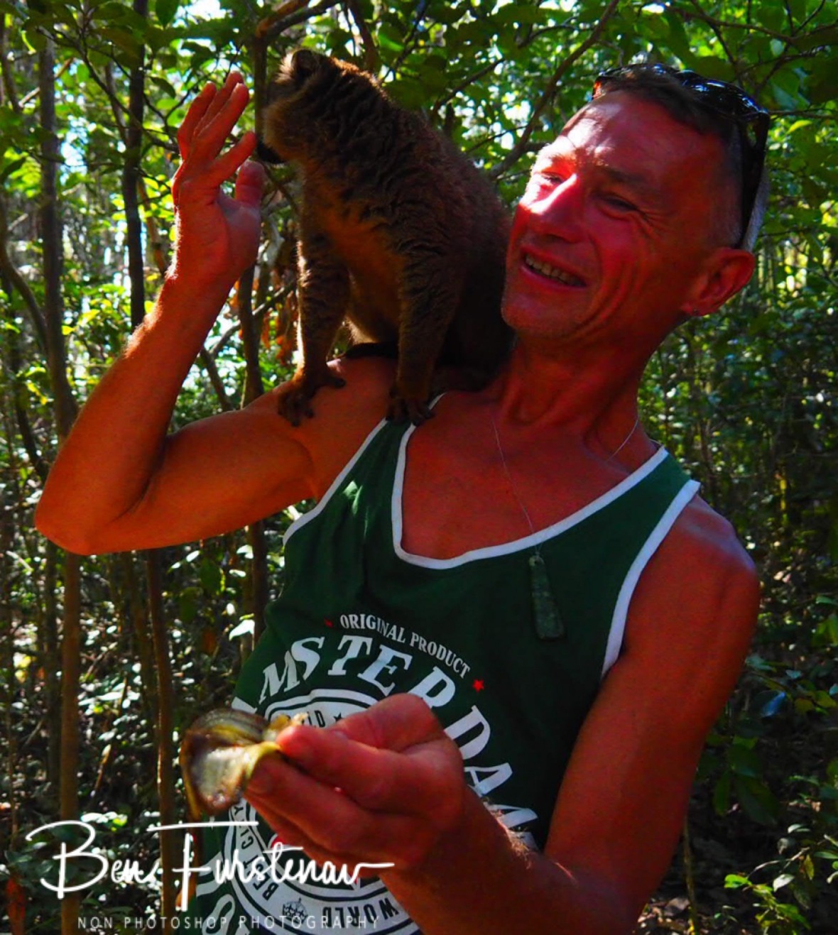 Feeding banana to a brown lemur