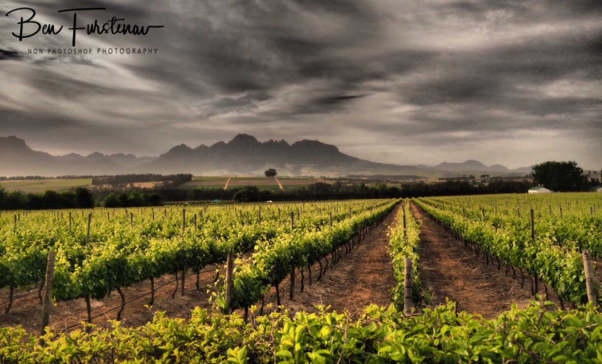Wine fields along the mountains, Stellenbosch