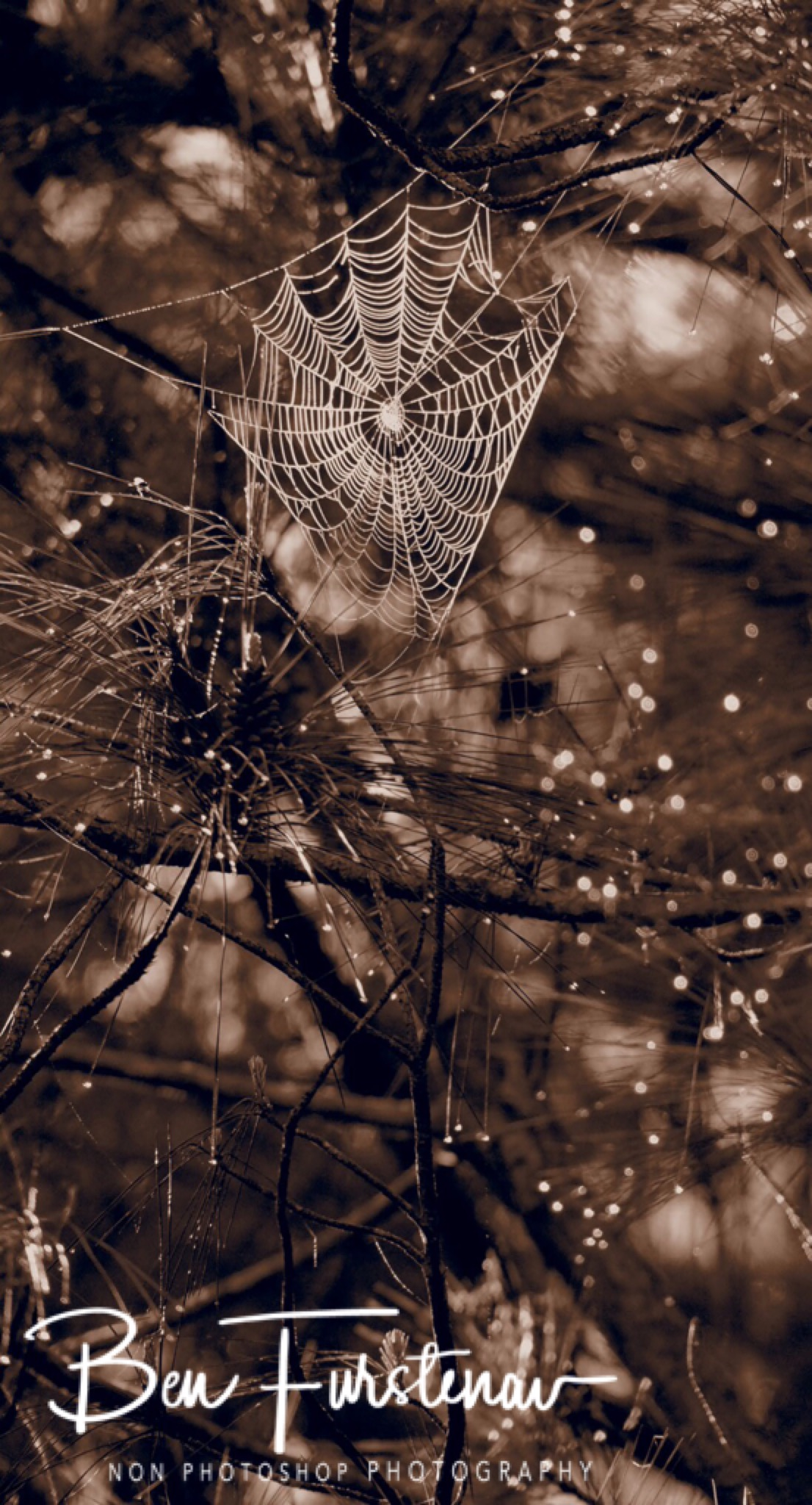 Misty Spiderwebs