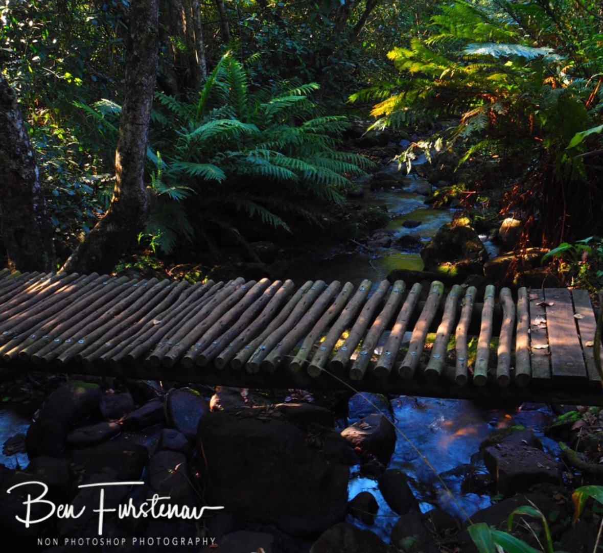 Lush creekside