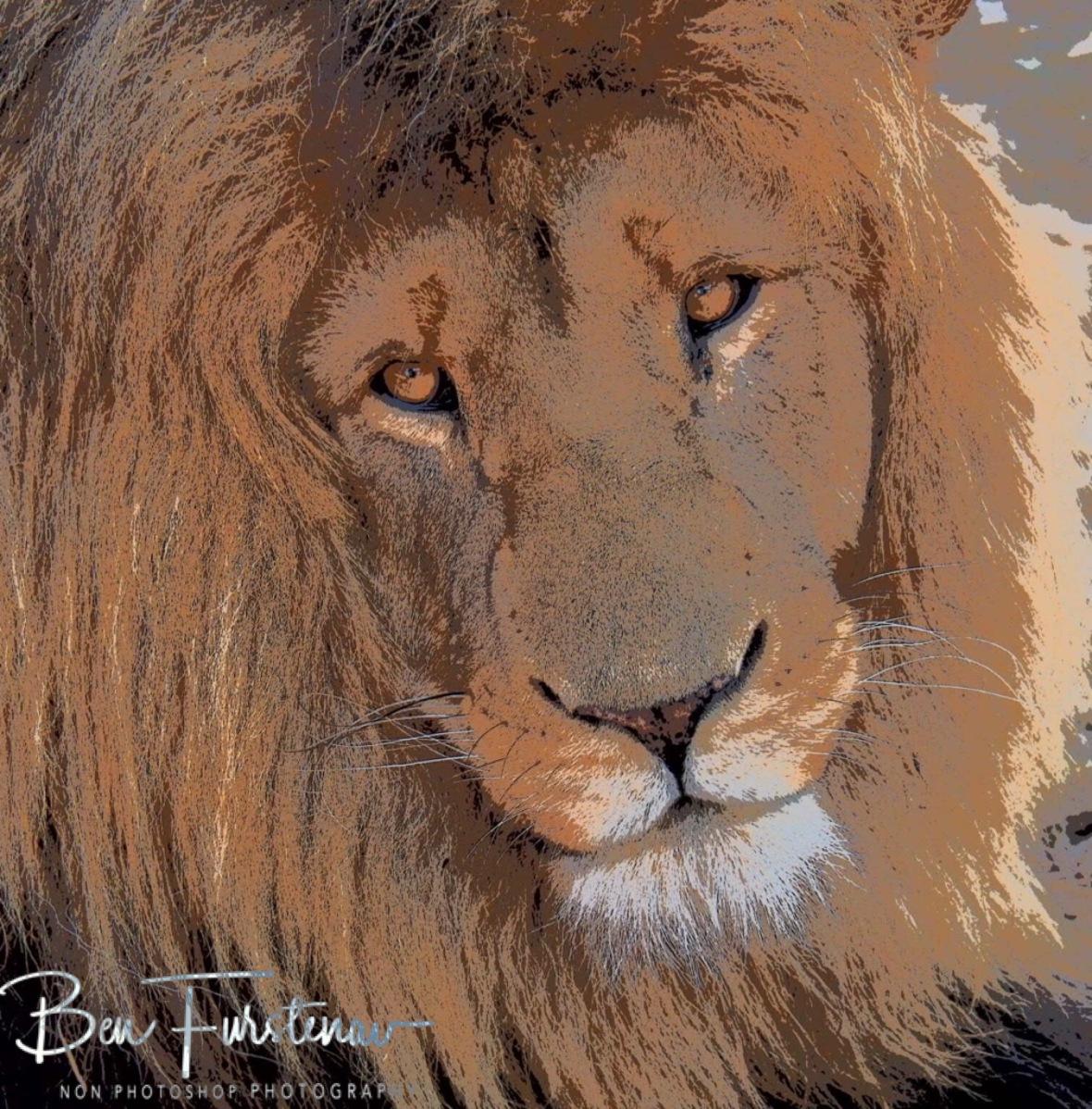 Lion king Ceisar