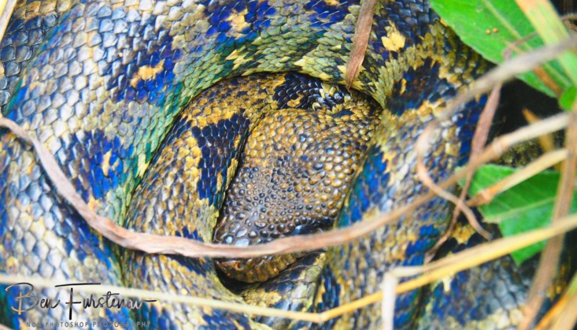Colourful Curled up Boa