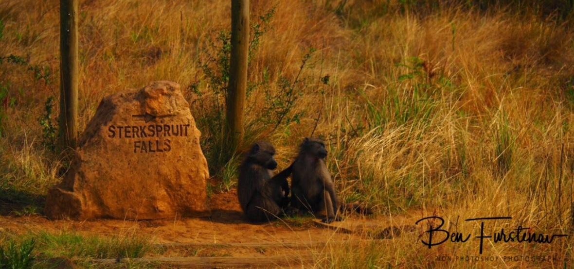 Signs off Monkeys