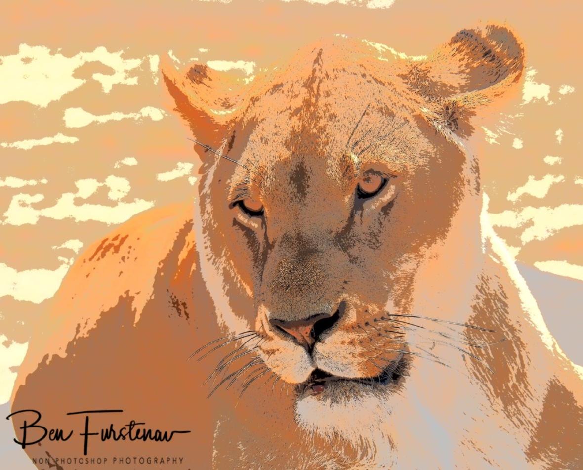 Lioness Letatsi