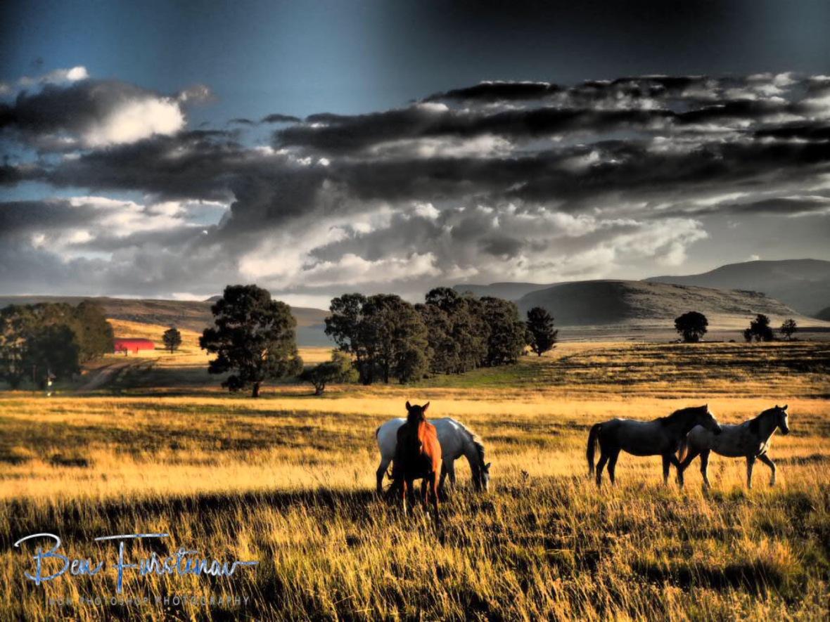 Horses in front off the Drakenberg escarpment, Maarmanshoek