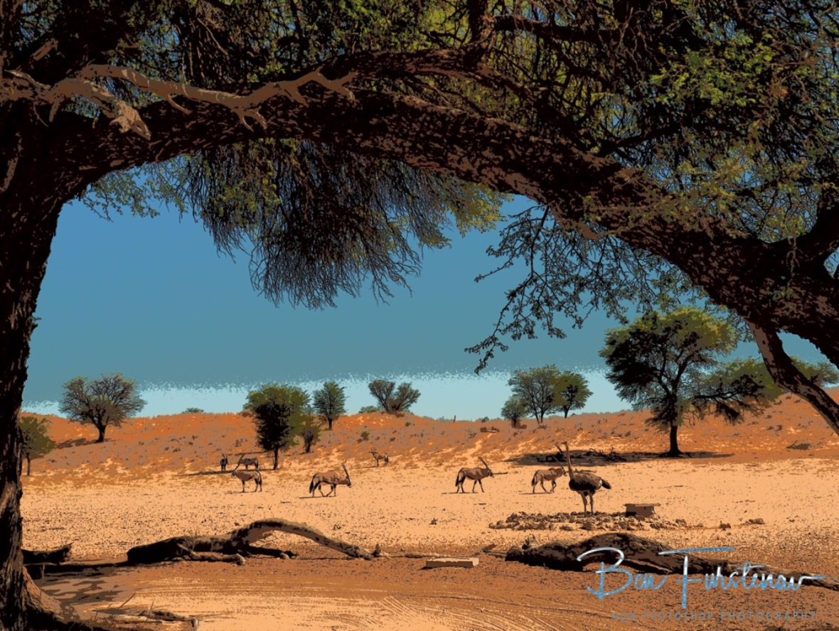 A wider view over the relatively small waterholes, Kgalagadi Transfrontier Park