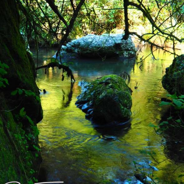 Golden reflections, lone creek falls