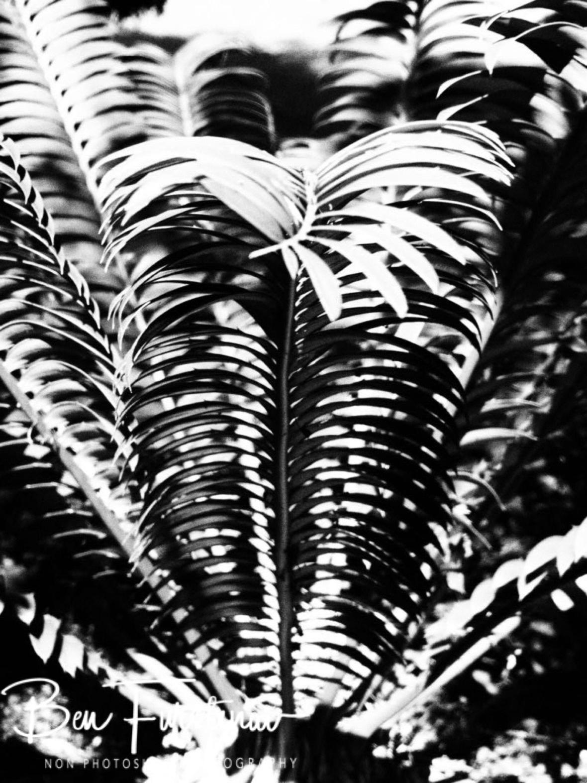 Shadow palms, Dundee