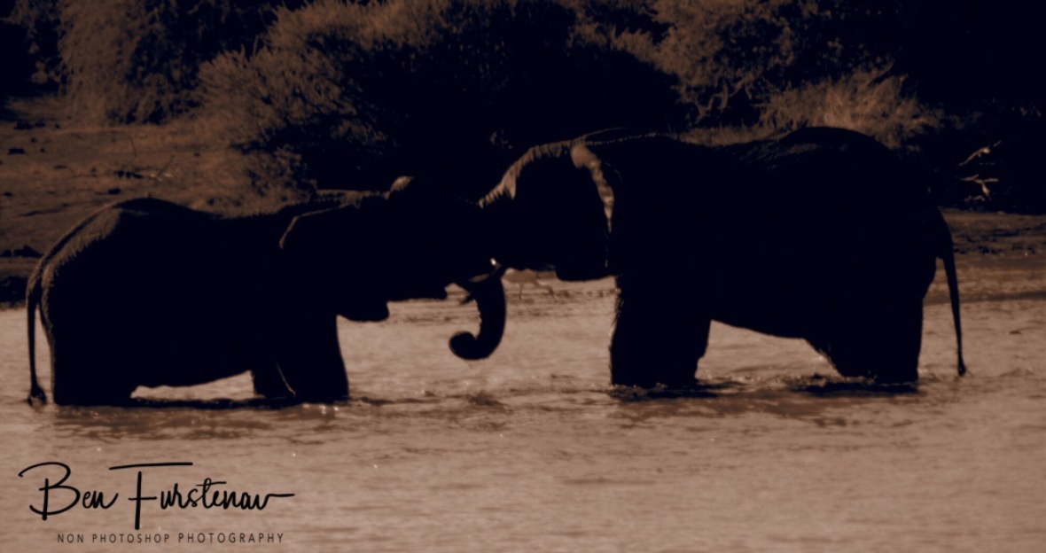 Testing their strength in cool waters, Pilansberg National Park