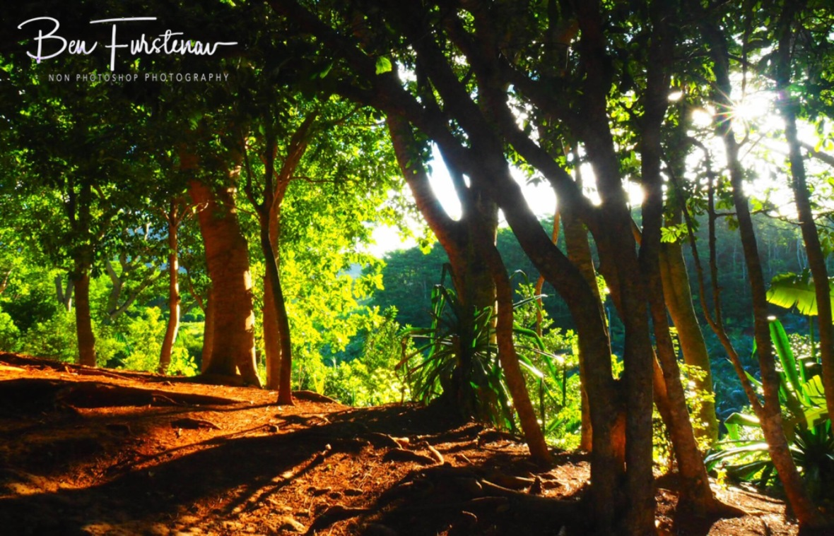 Sunlight's shining through dense Forrest at 7 coloured earth.