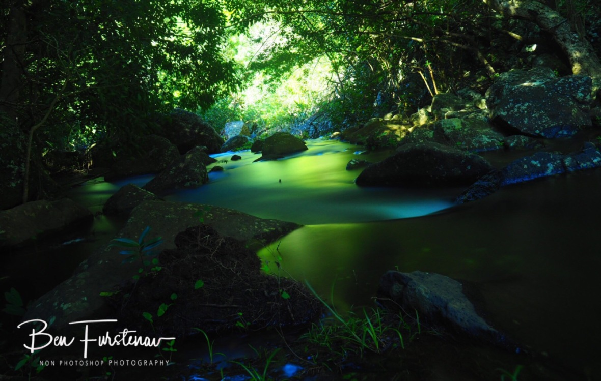Simply spectacular sunny reflections through lush vegetation, Black River National Park