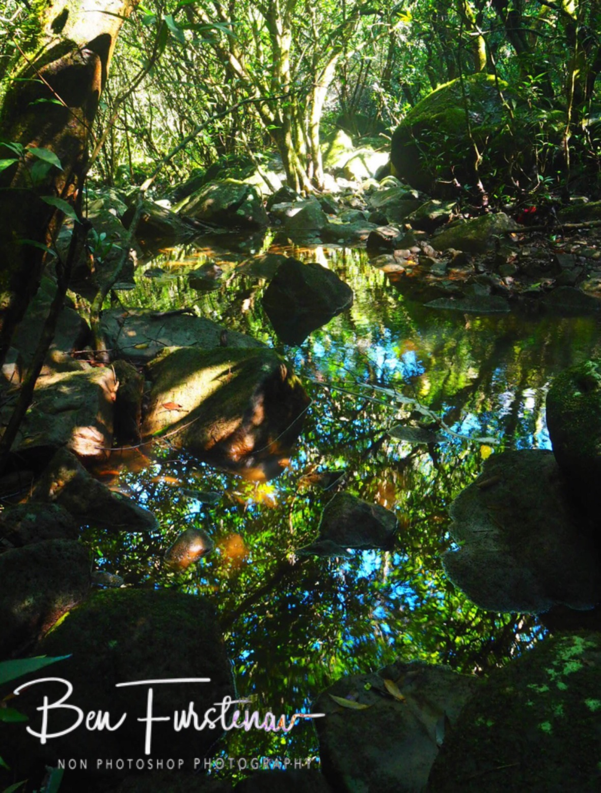 Colourful reflections in lush rainforest, Black River National Park