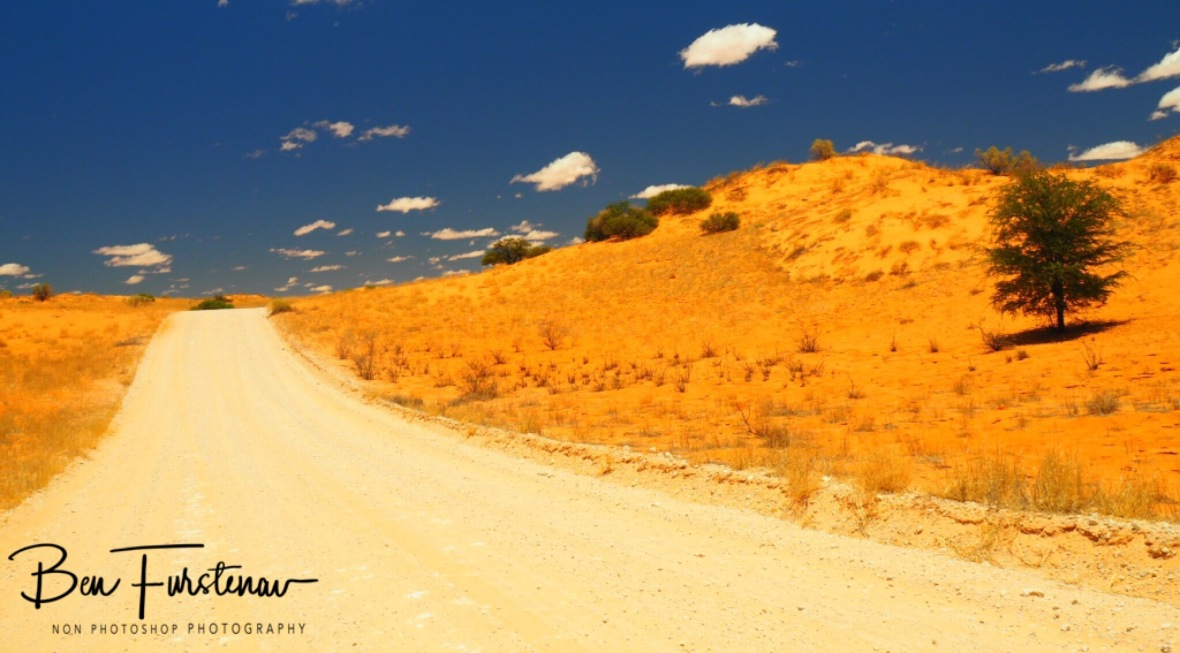 A well maintained road through the desert, Kgalagadi Transfrontier Park