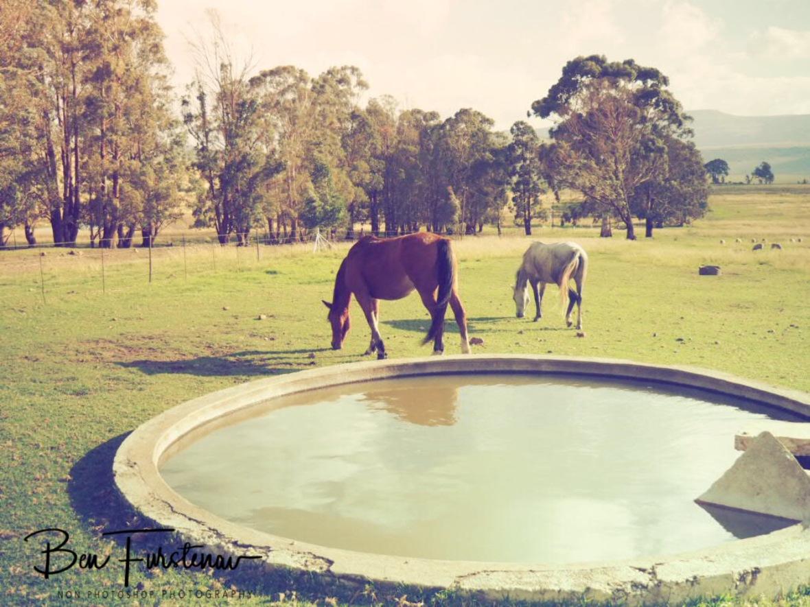 Vintage farm, Maarmanshoek