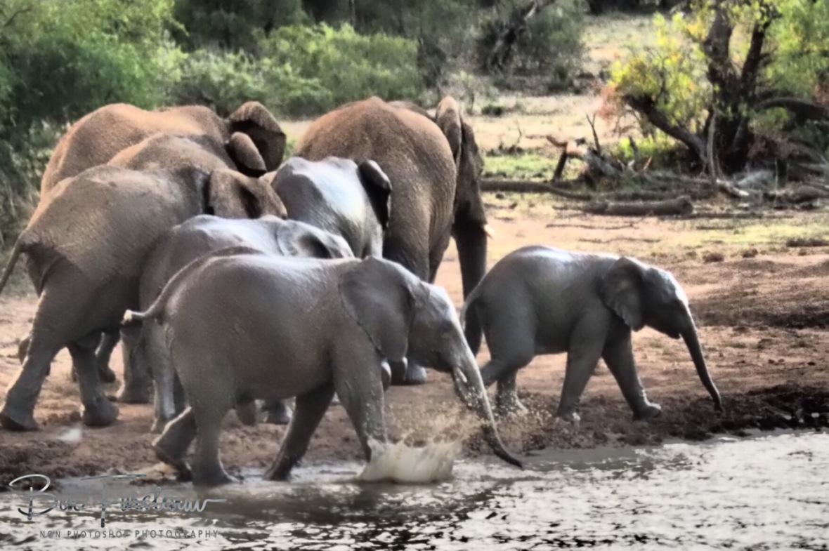 Elephant parade back in the bush, Pilansberg National Park
