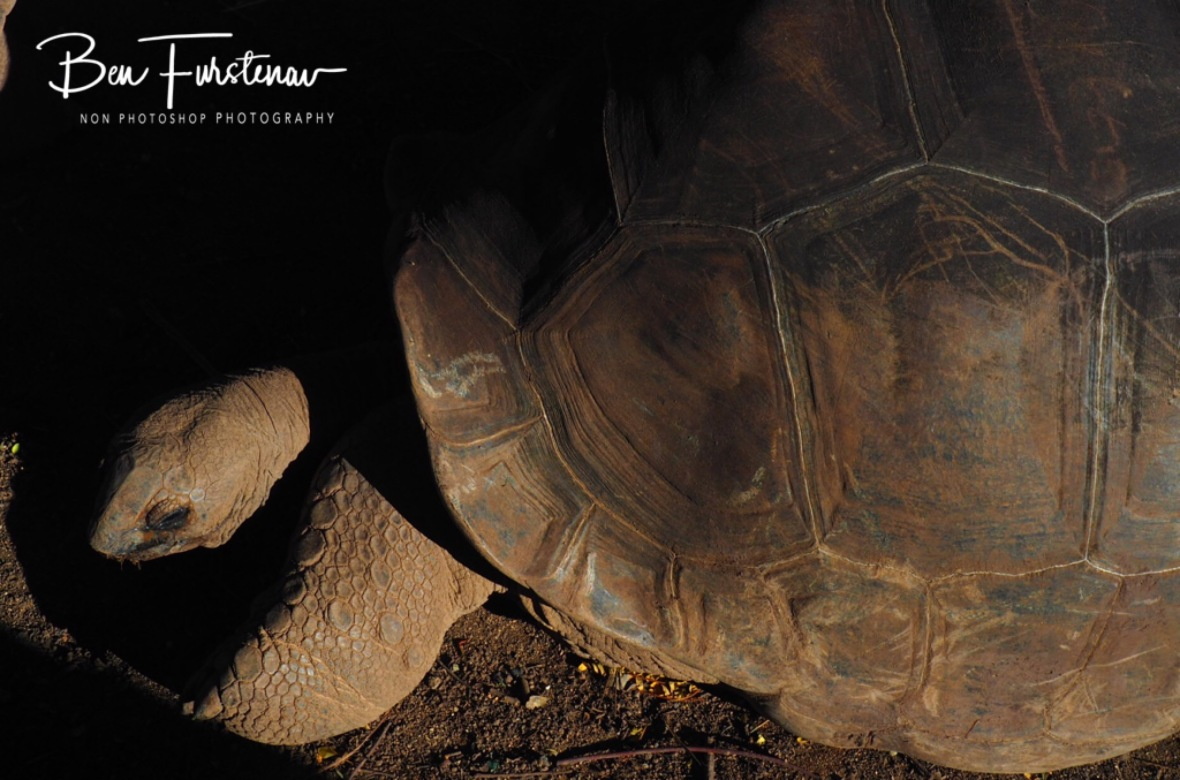 No one really knows how old these tortoise are, 7 coloured earth.