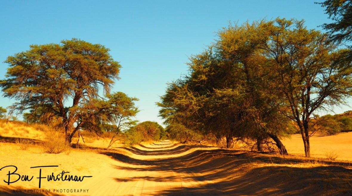 The soft sand track to Mata-Mata campground, Kgalagadi Transfrontier Park