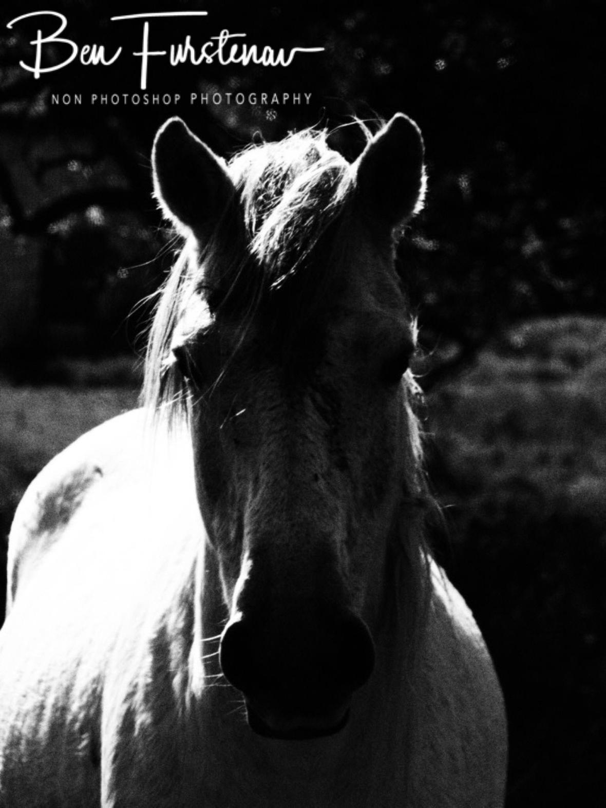 Farm horse, Dundee