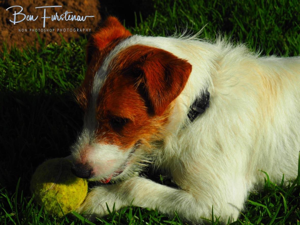 Puppy Thessa is still playful st heart, Maarmanshoek