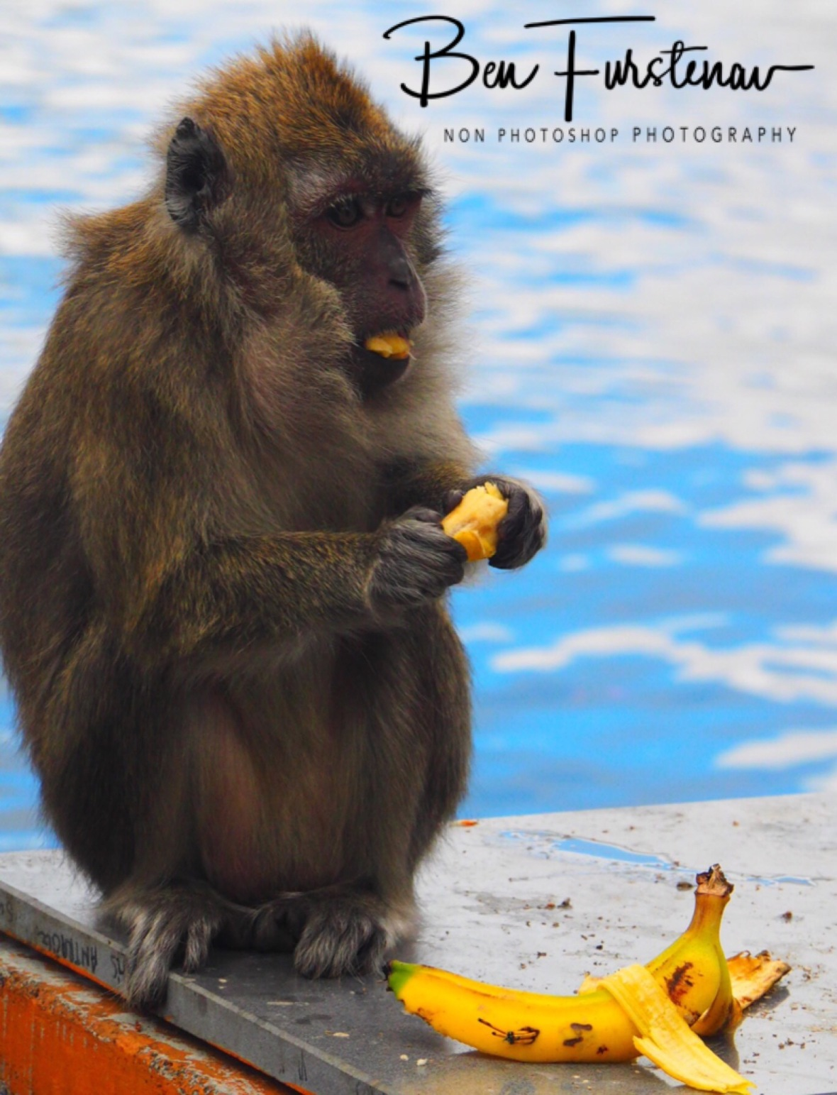 Monkey offerings at Grande Bassin.