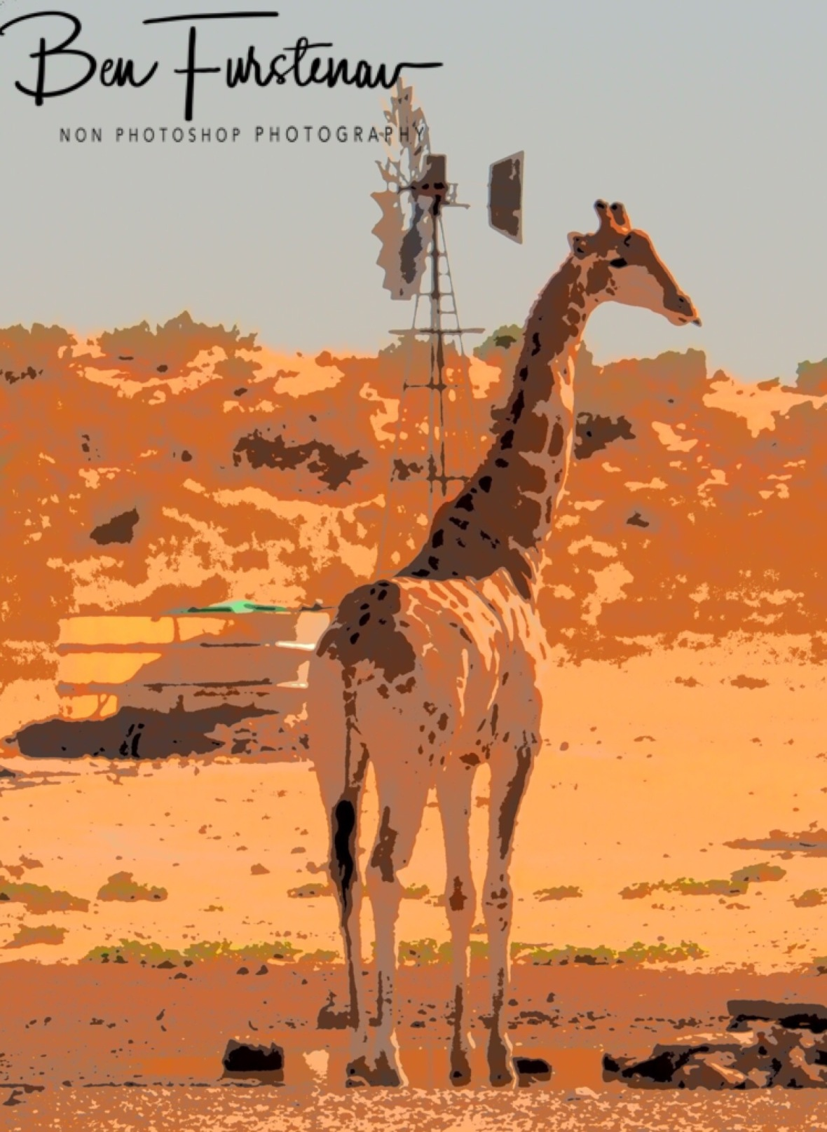 A giraffe on early morning patrol through Kgalagadi Transfrontier Park