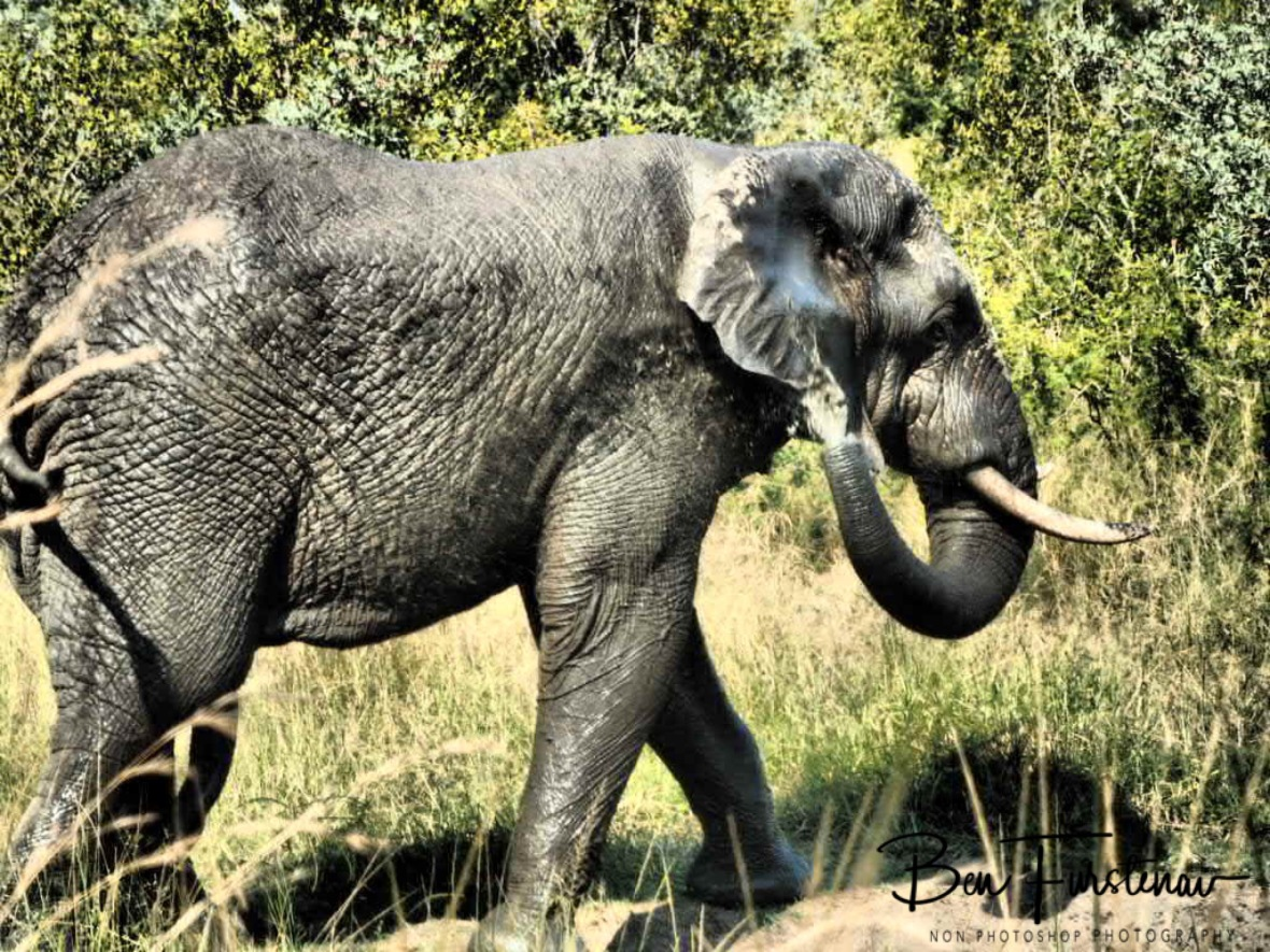 Elephant spa, Kruger National Park
