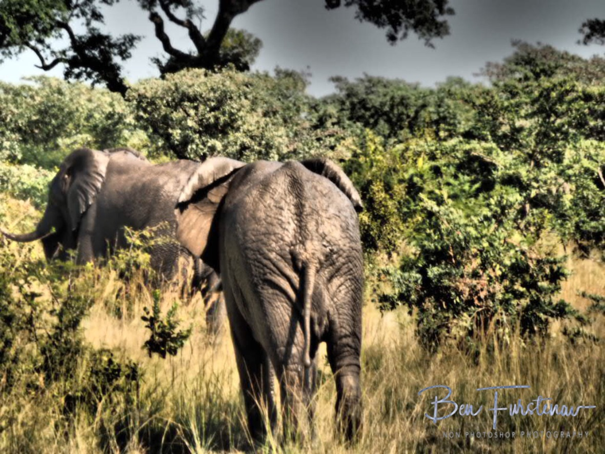 Happy and muddy elephants, Kruger National Park