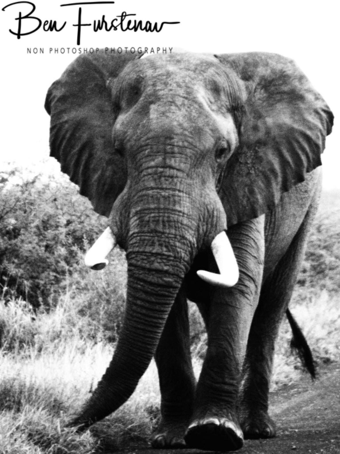 Slightly agitated, Kruger National Park