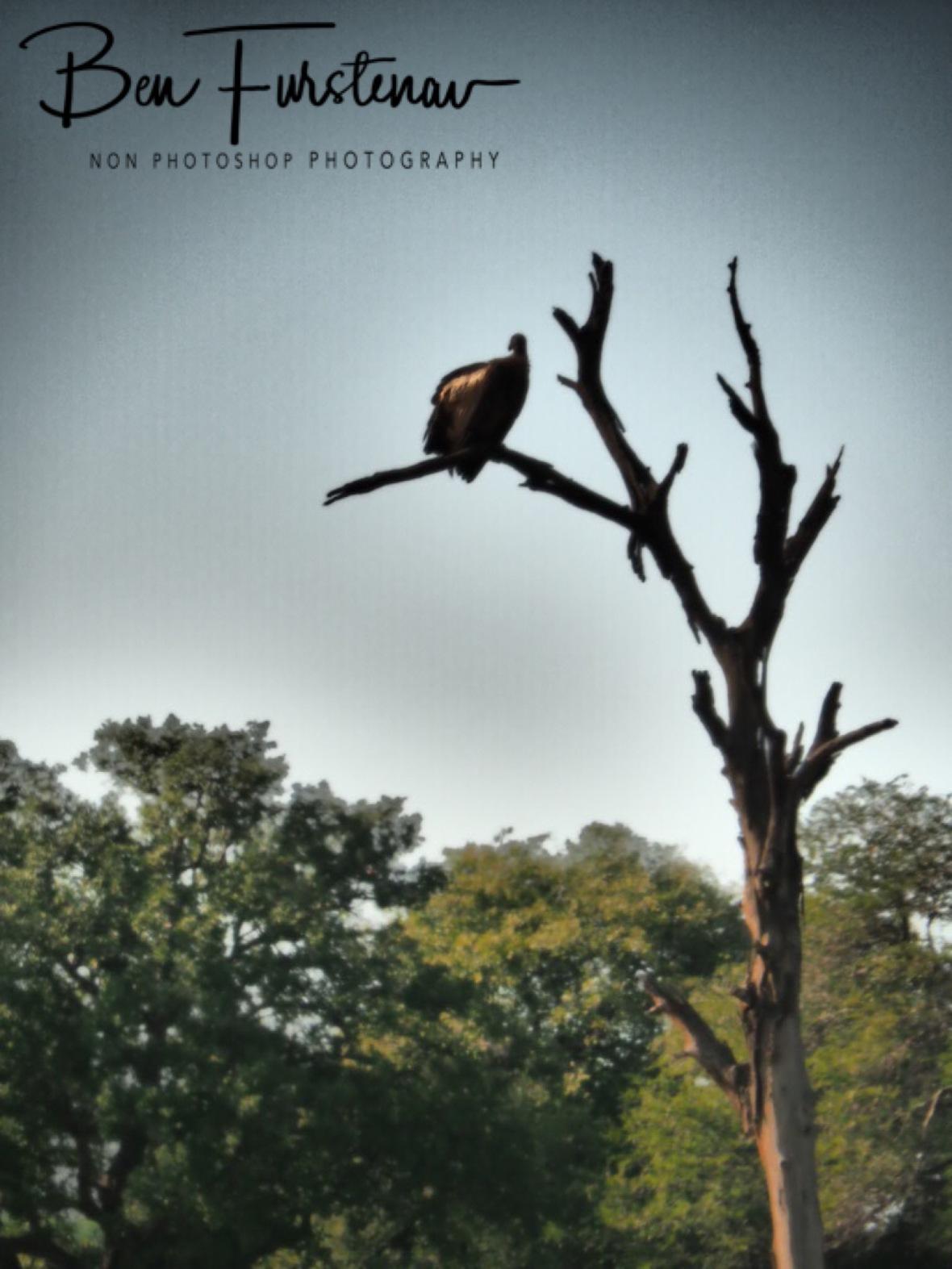 Vultures lookout, Kruger National Park