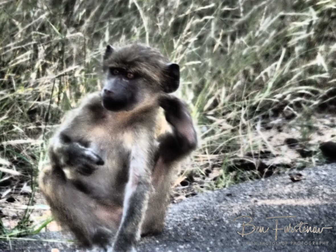Scratching that itch, Kruger National Park