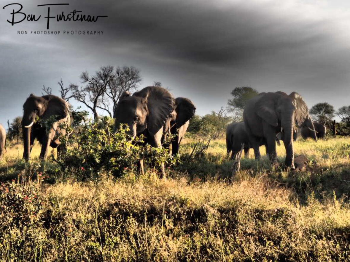 Afternoon tea, Kruger National Park