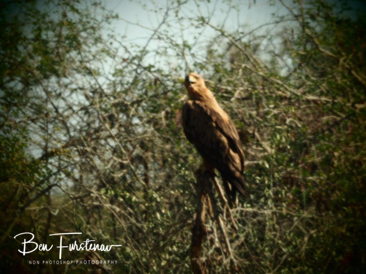 Eagle eye view, Kruger National Park
