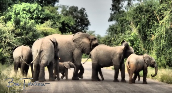 School book road crossing, Kruger National Park