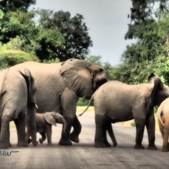 School book road crossing, Kruger National Park