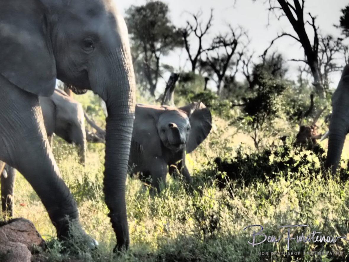 Happy mom, happy calf, Kruger National Park