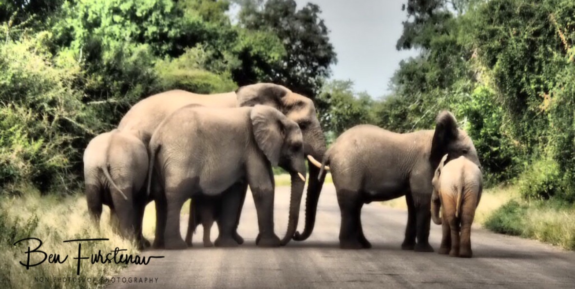 A common sight in Kruger National Park