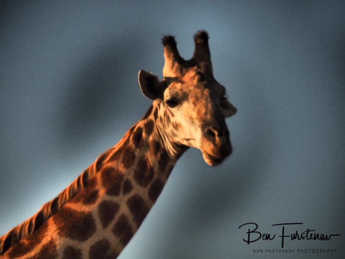 Still sleepy eyes, Kruger National Park