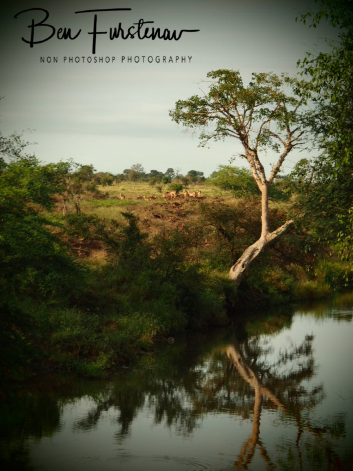 A tranquil morning in the Hyde, Kruger National Park