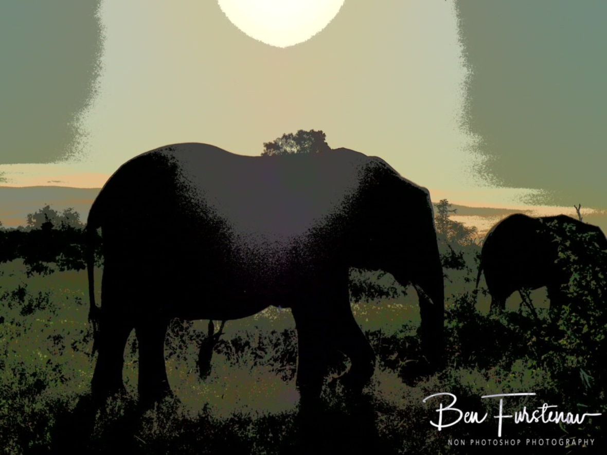 Elephant sunset, Kruger National Park