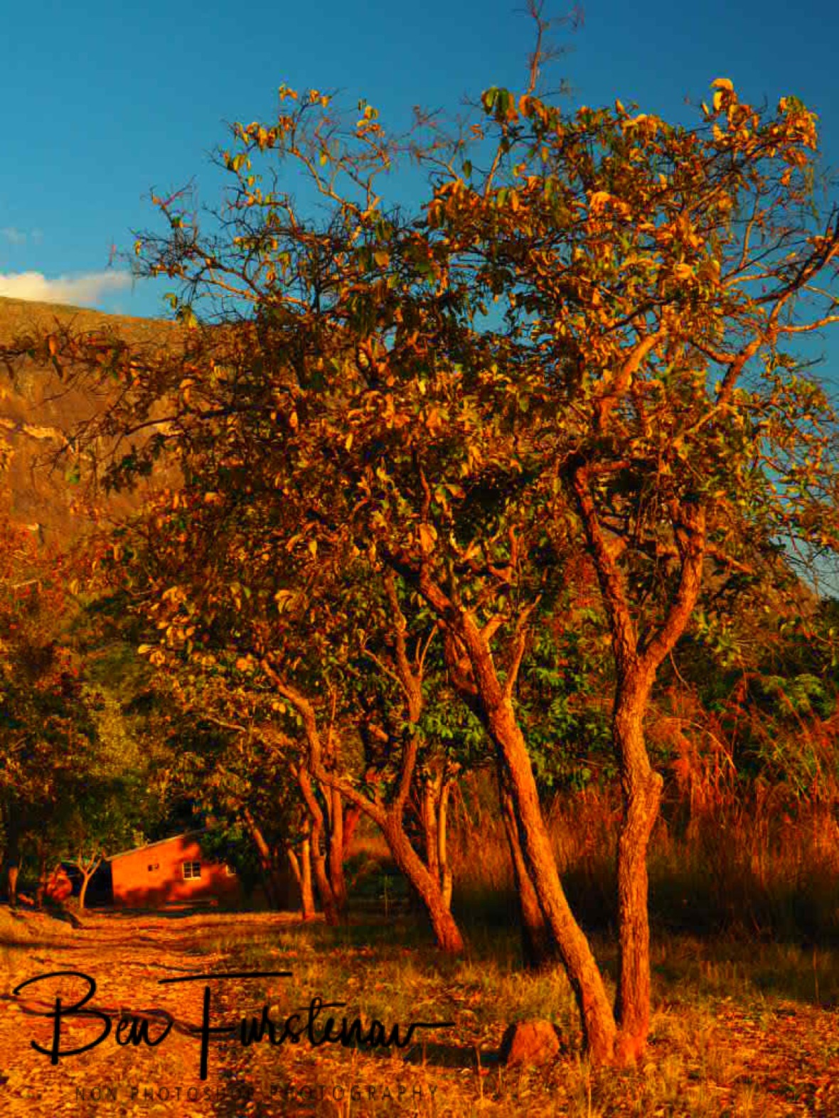 Fiery red colours, Mulanje Mountains, Malawi