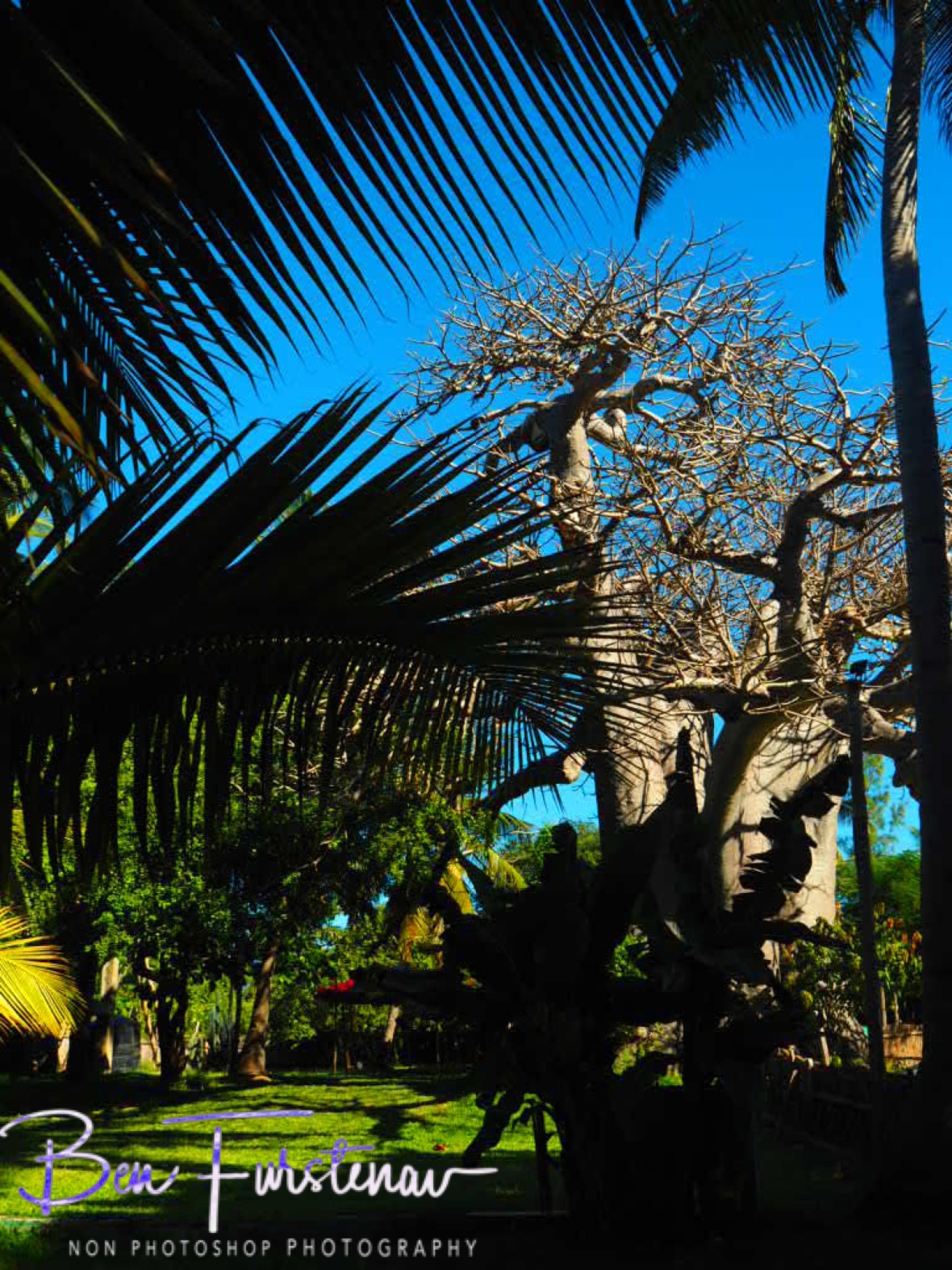 Baobab, Palm tress and banana plants, 3 off my favourites, Vilankulo, Mozambique