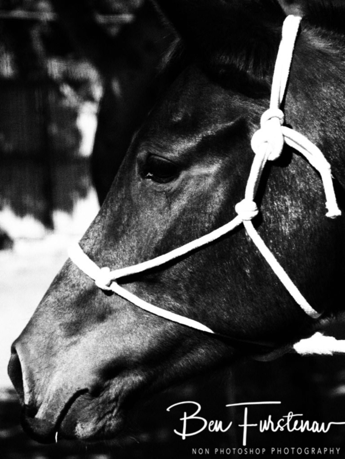 Black and white horse, Vilankulo, Mozambique